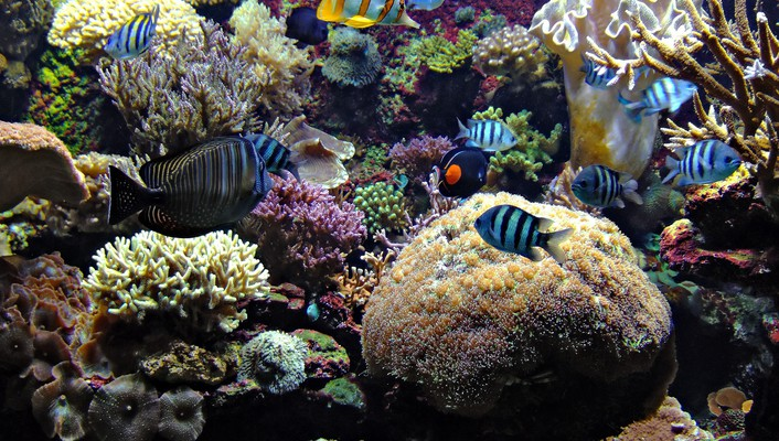 Aquarium fish wallpaper