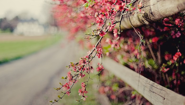Flora blurred background bokeh branches fences wallpaper