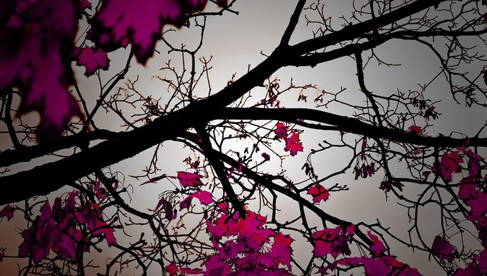 Nature trees pink leaves color pop wallpaper