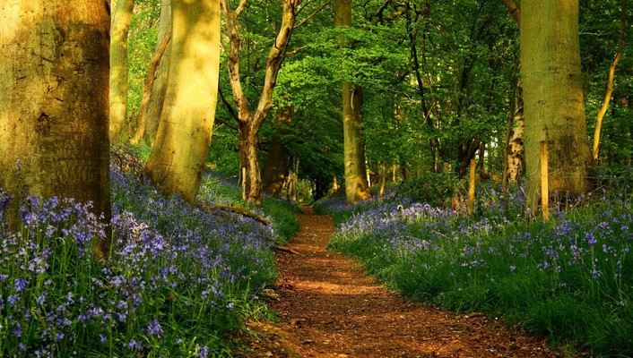Flowers forests green nature outdoors wallpaper
