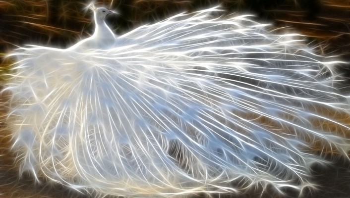 Fractalius birds feathers peacocks wallpaper