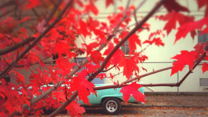 Leaves trucks wallpaper