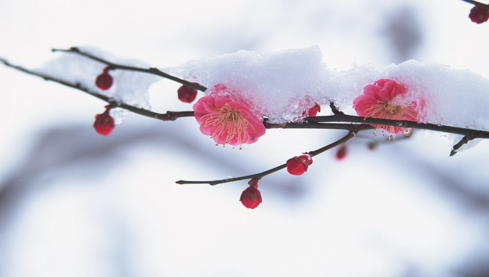Spring with a dust of snow wallpaper