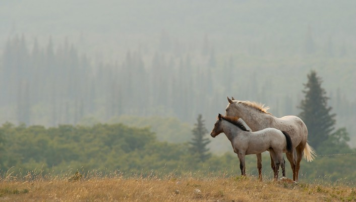 Pair of beautiful horses wallpaper