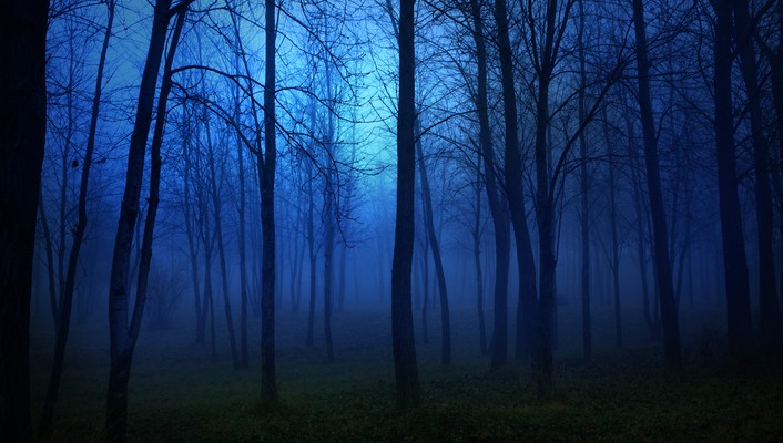 Blue dark forests wallpaper