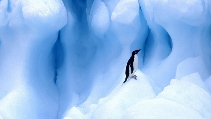 Ice nature birds animals penguins wallpaper