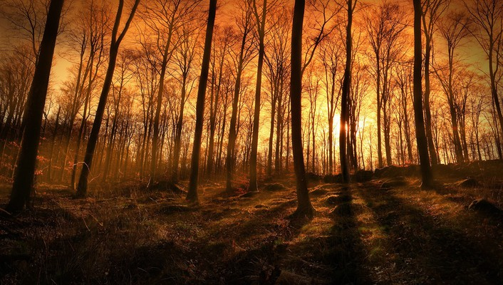Sunset sunbeams coming through the forest wallpaper