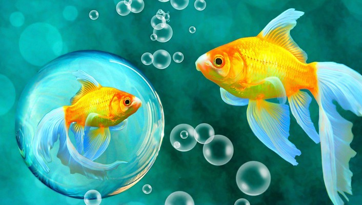 Gold bubbles goldfish bokeh underwater fishes sea wallpaper