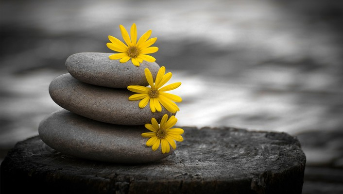 Stones and flowers wallpaper