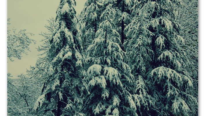 Winter snow trees pine wallpaper