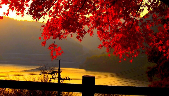 Red autumn leaves at dusk wallpaper