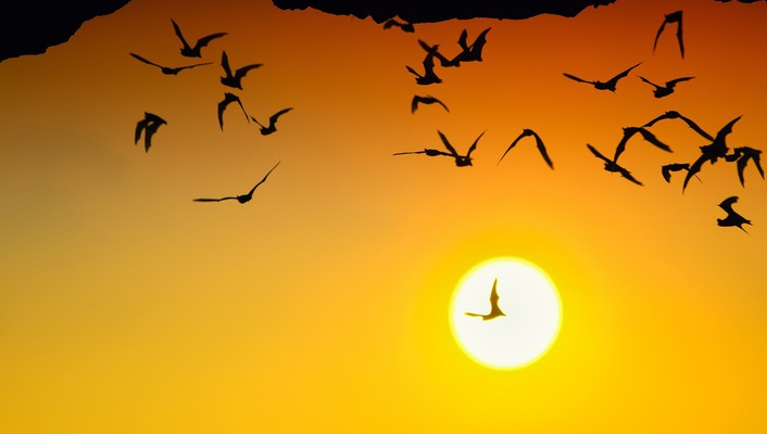 Sun flying silhouettes bats wallpaper