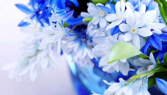 Marvelous blue flowers wallpaper