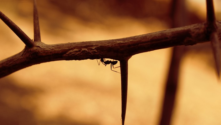 Nature ant wallpaper