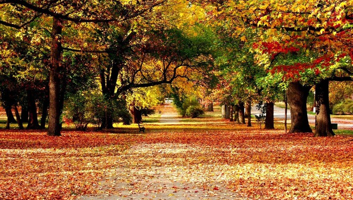 Autumn nature roads wallpaper