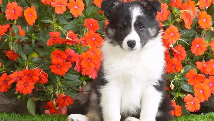 Animals dogs flowers nature puppies wallpaper
