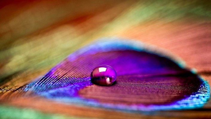 Closeup colors drop feathers macro wallpaper