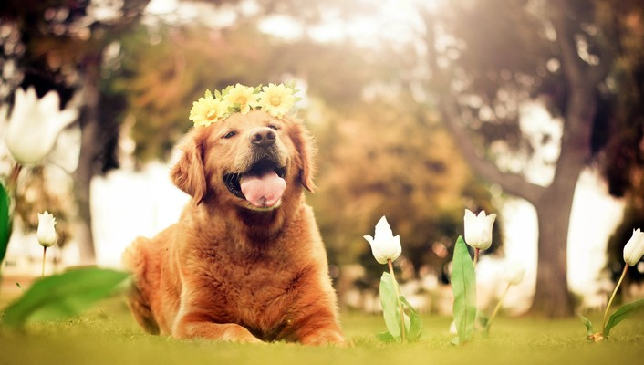 Springtime makes me happy wallpaper