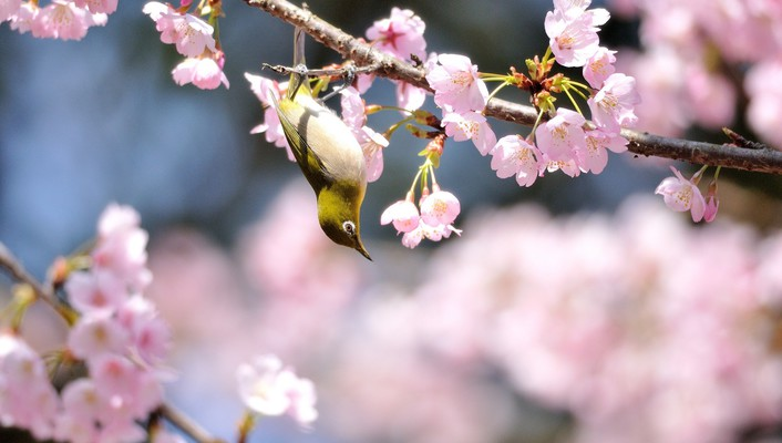 Flowers birds animals wallpaper