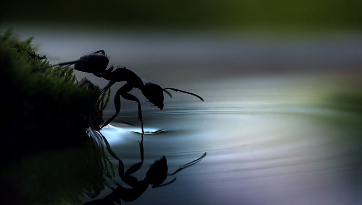 Water insects ants ripples reflections wallpaper
