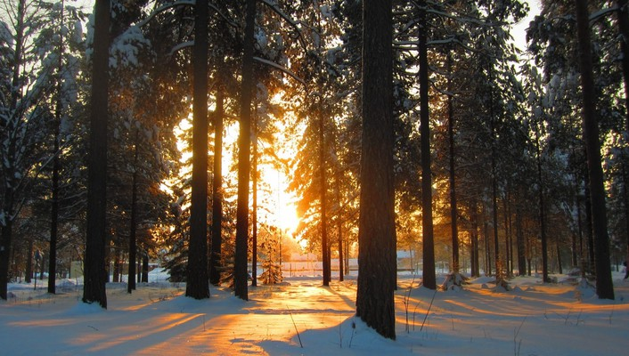 Forests nature snow sunlight trees wallpaper