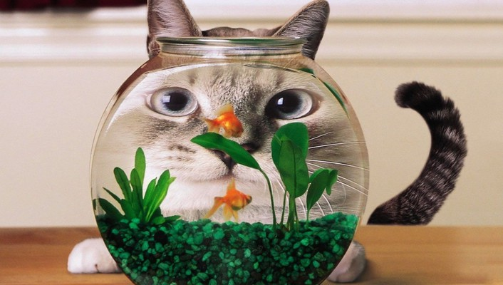 Cat fishbowl wallpaper