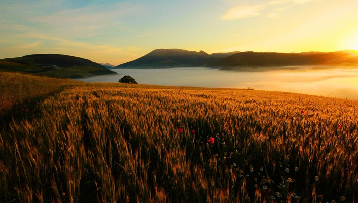 Landscapes flowers fields sunlight spikelets wallpaper