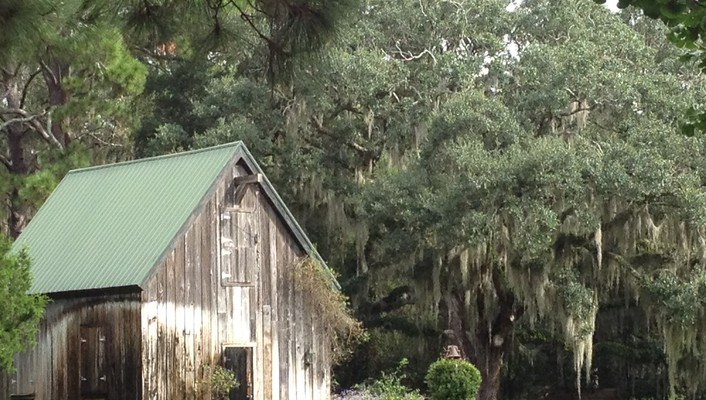 Spanish moss by old barn wallpaper