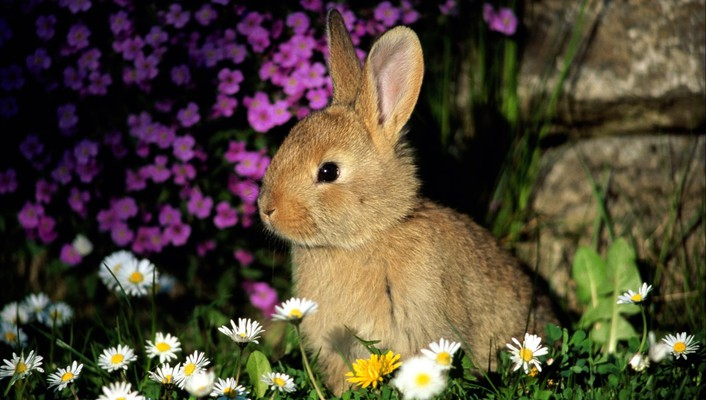 Animals flowers rabbits wallpaper