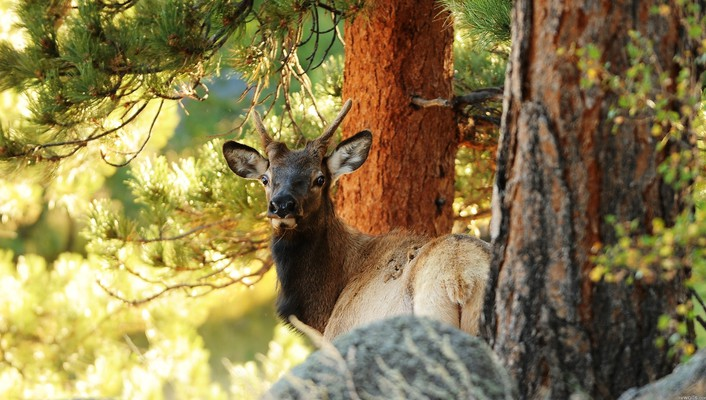 Animals antelope forests nature trees wallpaper