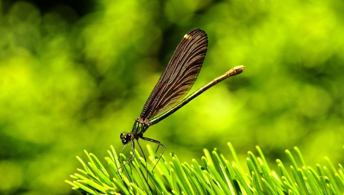 Dragonflies green insects nature wallpaper