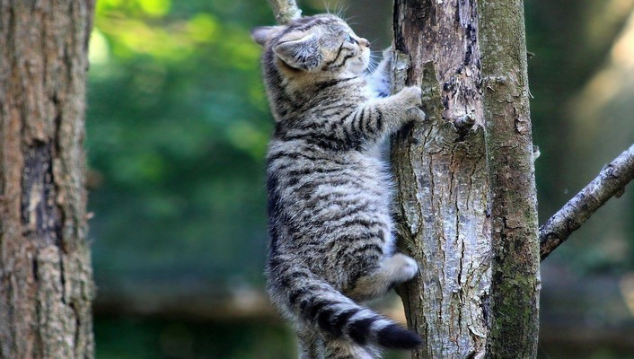 Kitten climbing a tree wallpaper