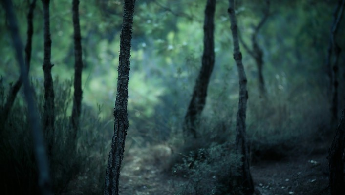 Depth of field forests gloomy landscapes nature wallpaper