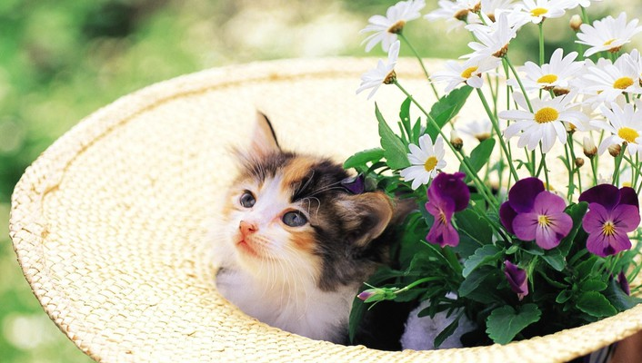 Kitten in a hat with flowers wallpaper