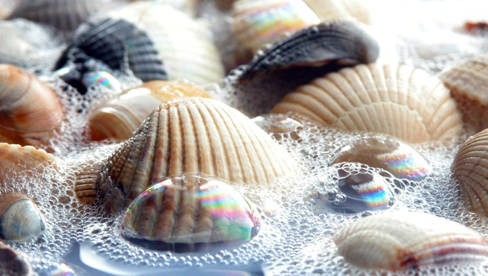Seashells water wallpaper