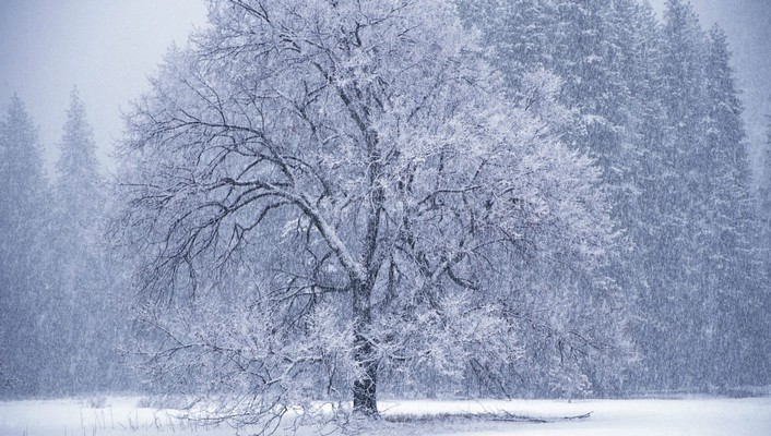 Landscapes nature winter trees snowfall hoarfrost wallpaper