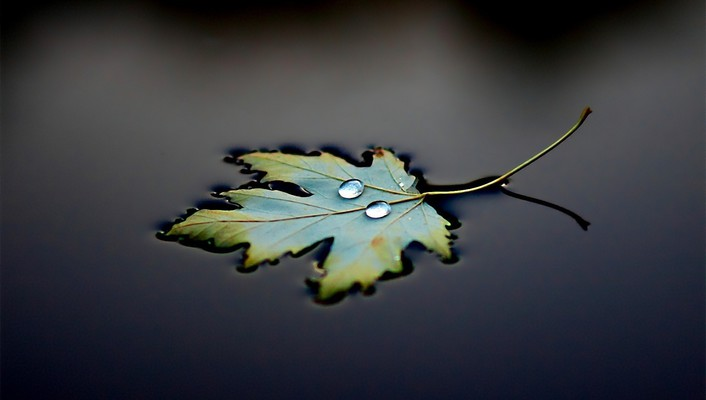 Leaves water wallpaper
