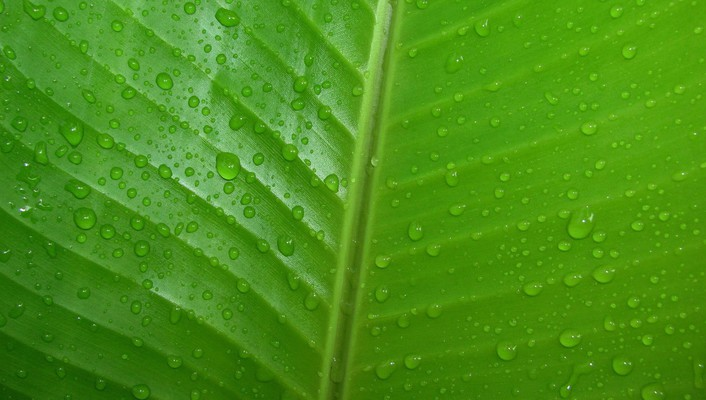 Green leaves nature water drops wallpaper
