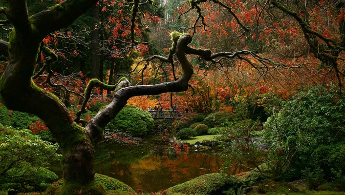 Japanese gardens trees wallpaper