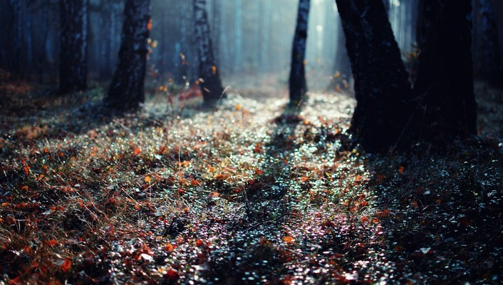Forests ground landscapes nature trees wallpaper