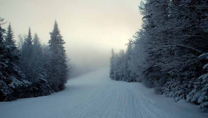 Forests landscapes paths snow trees wallpaper