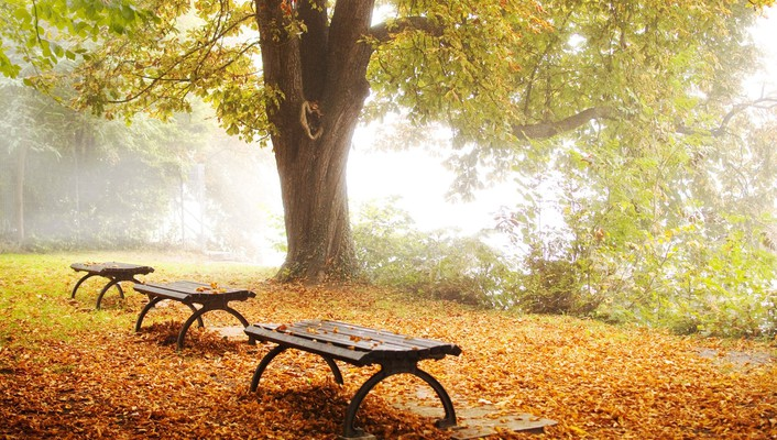 Autumn bench lakes trees wallpaper