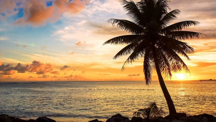 Sunset nature palm trees seascapes wallpaper