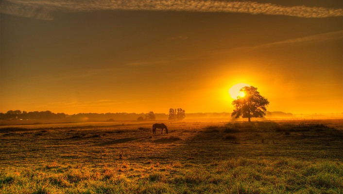 Sun horses landscapes trees wallpaper