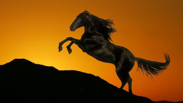 Sunset animals hills horses wallpaper