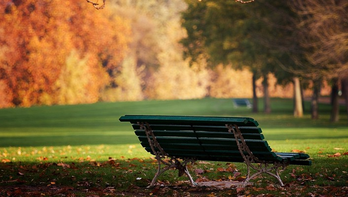 Bench grass parks trees wallpaper