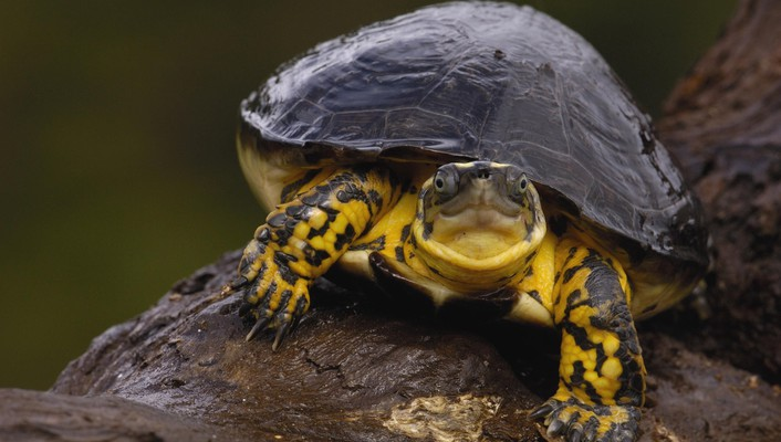 Nature wall animals turtles wallpaper