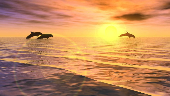 Jumping dolphins at sunset wallpaper
