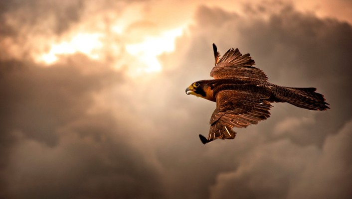 Animals birds brown clouds flight wallpaper