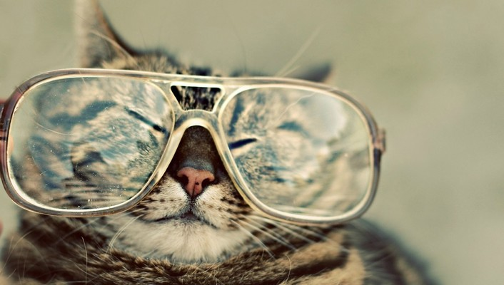 Cats animals glasses wallpaper